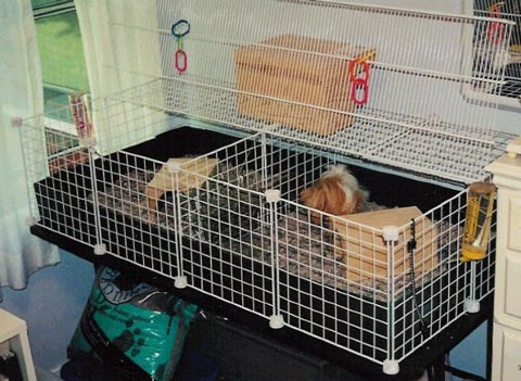 Got an idea how can i divide the cage up the guinea for 2 story guinea pig cages for sale